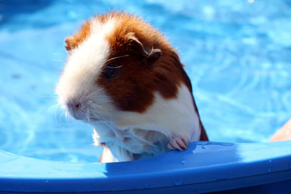 How to Keep Rodents Out of Your Pool Heater
