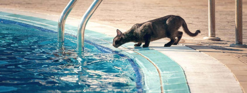 Pool Safety for Cats
